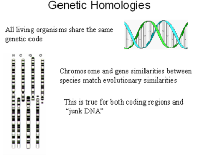 Homologi Kode Genetik