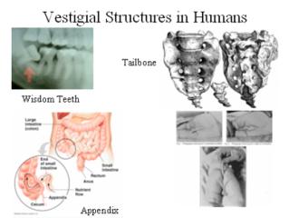 Beberapa Struktur Sisa dari Manusia